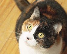 川口市の動物病院「どうぶつのセンター病院」の健康診断(犬・猫)