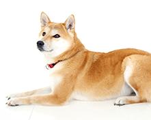 川口市の動物病院「どうぶつのセンター病院」の歯石の除去(犬)