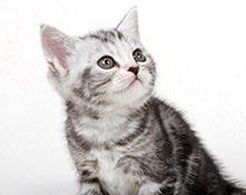 川口市の動物病院「どうぶつのセンター病院」の各種予防(犬・猫)