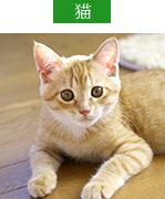 対象診療動物・猫