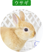 対象診療動物・ウサギ