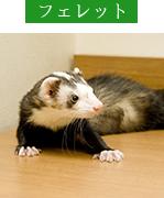 対象診療動物・フェレット