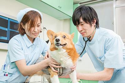 明るく親切、いつでも頼れる動物病院