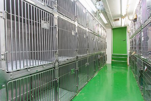 川口市の動物病院「どうぶつのセンター病院」の入院施設