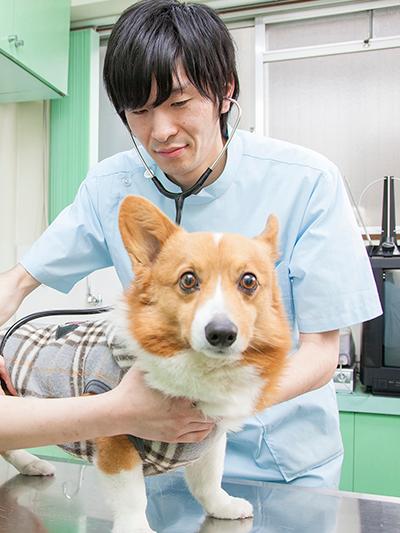 川口市の動物病院「どうぶつのセンター病院」の獣医師